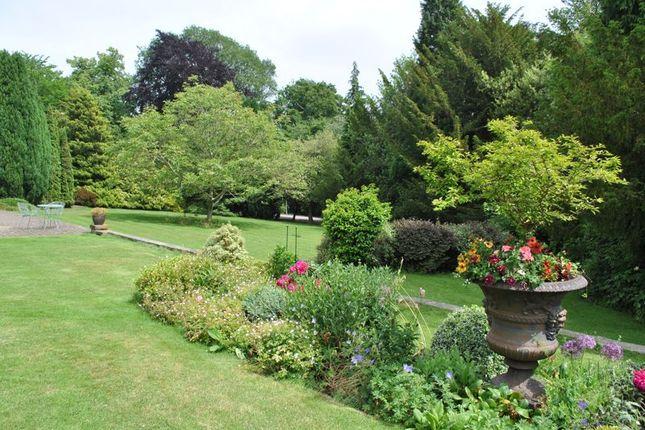 Communal Gardens In The Summer