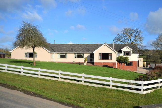 Thumbnail Bungalow for sale in Shillingford, Bampton, Devon