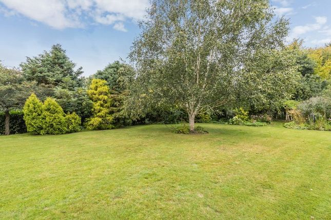 Photo 14 of The Drive, Maresfield Park, Maresfield, Uckfield TN22