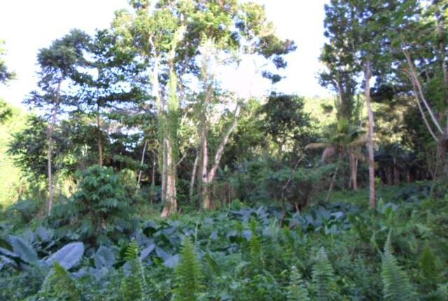 Land for sale in Anchovy, Saint James, Jamaica