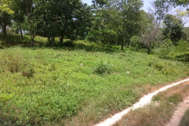 Land for sale in Gayle, Saint Mary, Jamaica
