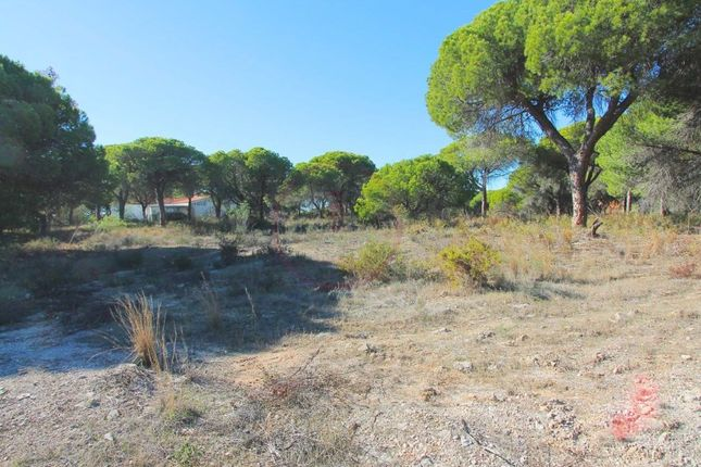 Thumbnail Land for sale in Almancil, Almancil, Loulé