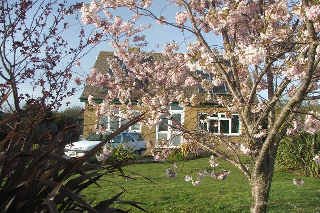 Cherry Blossom of Alverstone Road, East Cowes PO32