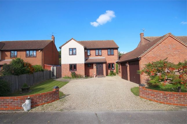 Thumbnail Detached house for sale in Acorn Avenue, Braintree, Essex