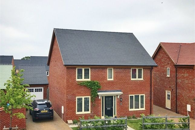 Thumbnail Detached house for sale in Hobby Drive, Corby, Northamptonshire