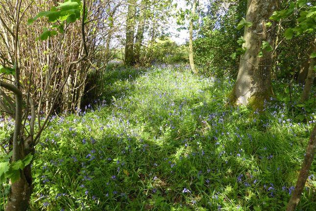 Woodland of Poltimore Road, Farway, Colyton, Devon EX24