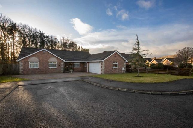 Thumbnail Bungalow for sale in Old Coach Avenue, Belfast