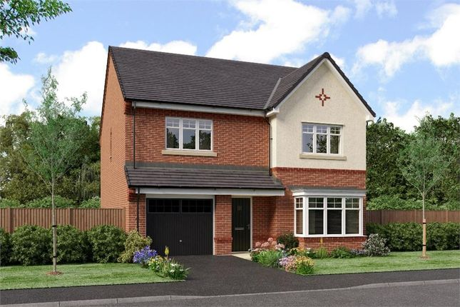 "Thumbnail Detached house for sale in ""The Ryton"" at Sadberge Road, Middleton St. George, Darlington"