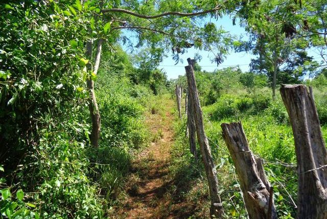 Land for sale in Southfield, Saint Elizabeth, Jamaica