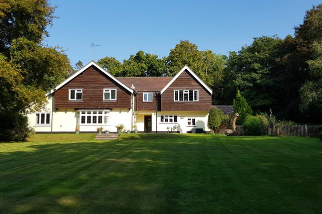 Thumbnail Hotel/guest house for sale in Guest House, Ringwood