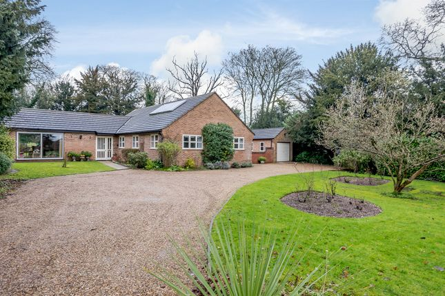 Thumbnail Detached bungalow for sale in Newmarket Road, Cringleford, Norwich