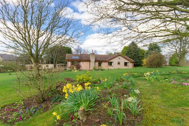 Thumbnail Detached bungalow for sale in West Drive, Berwick-Upon-Tweed, Northumberland