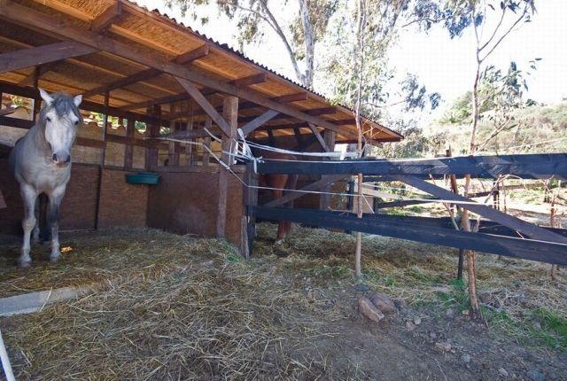 Animal Shelters of Spain, Málaga, Mijas, La Cala