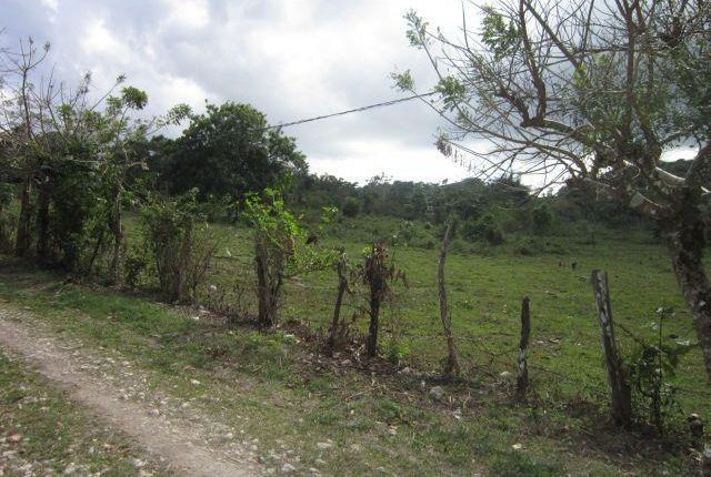 Land for sale in Great Valley, Hanover, Jamaica