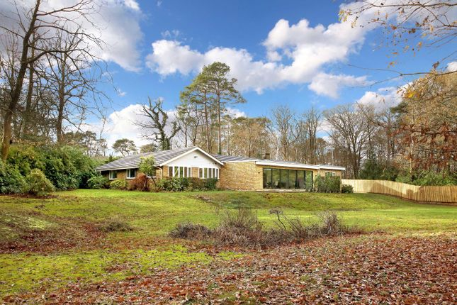 Thumbnail Bungalow for sale in Shepley End, Wentworth, Berkshire
