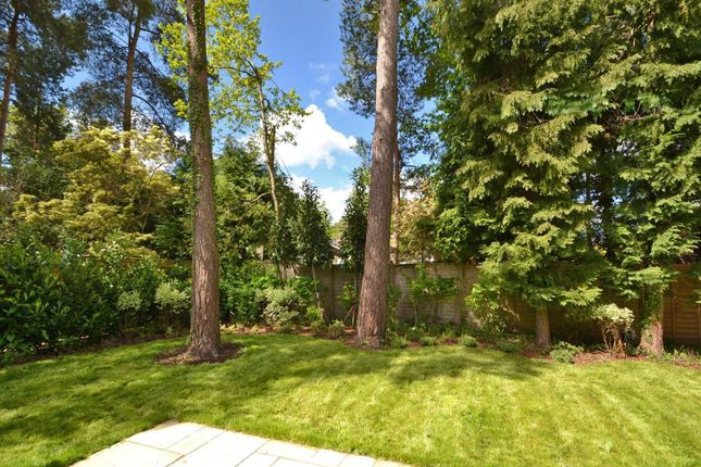 Garden of No Though Road, Village Outskirts, Storrington RH20
