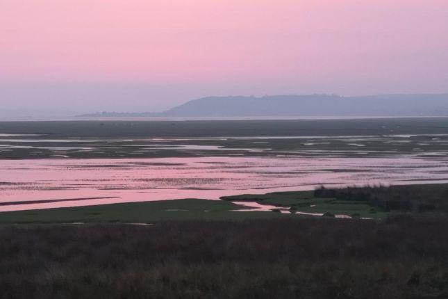 Pink Dreams of Landimore, Gower, Swansea, Wales SA3