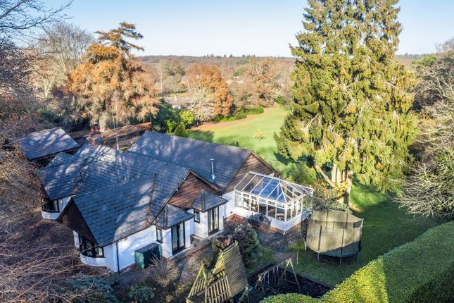 Thumbnail Detached bungalow for sale in Beechwood Lane, Burley, Ringwood