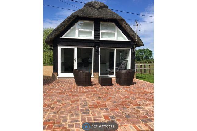 Thumbnail Semi-detached house to rent in Wimborne, Dorset