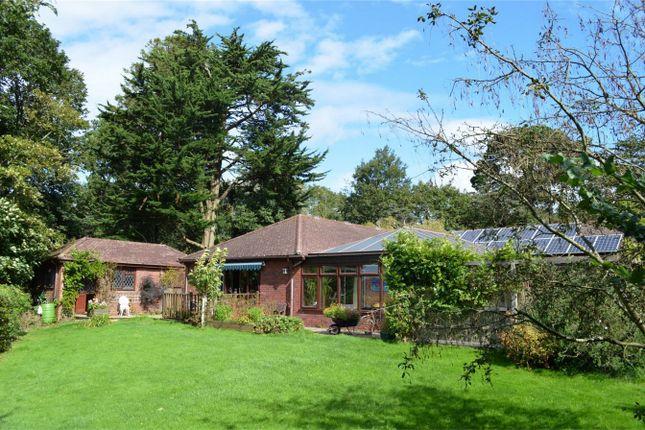 Thumbnail Detached house for sale in Pinetops, Knappe Cross, Brixington Lane, Exmouth, Devon