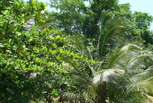 Land for sale in Somerton, Saint James, Jamaica