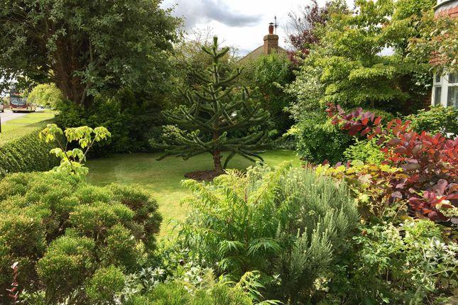 Front Garden, 54 Hollym Road (1)