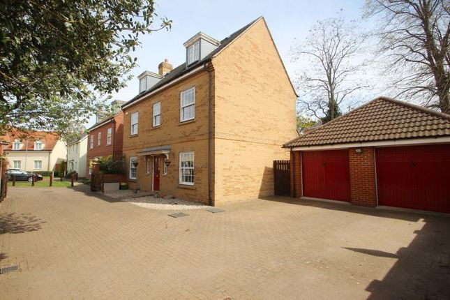 Thumbnail Detached house to rent in Whitebeam Close, Colchester, Essex