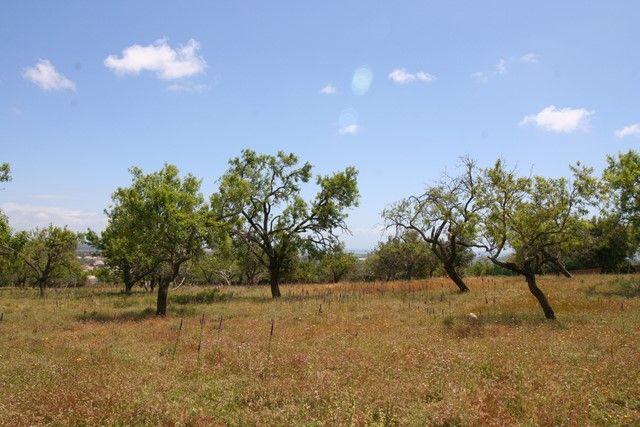 Land for sale in Portugal, Algarve, Boliqueime