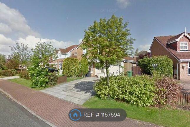 Thumbnail Detached house to rent in Barbondale Close, Great Sankey, Warrington