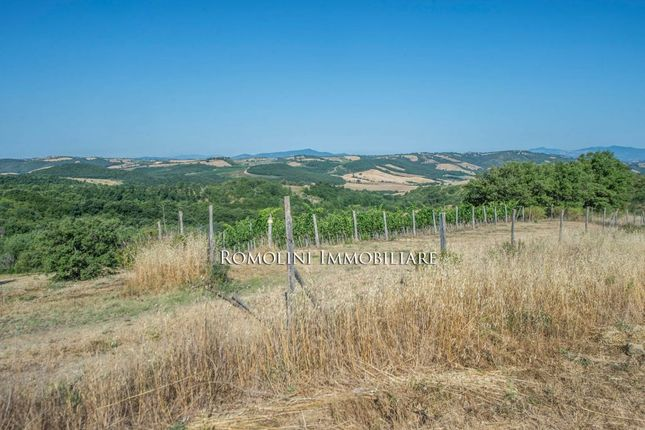 Wine Estate With Apartment For Sale In Grosseto, Tuscany