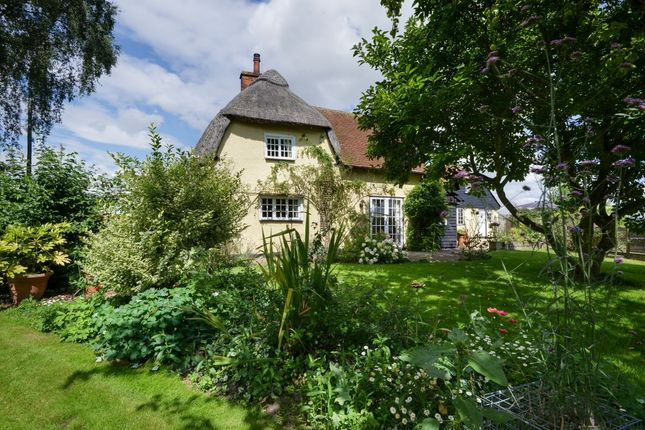 Thumbnail Detached house for sale in Braintree Road, Shalford, Braintree