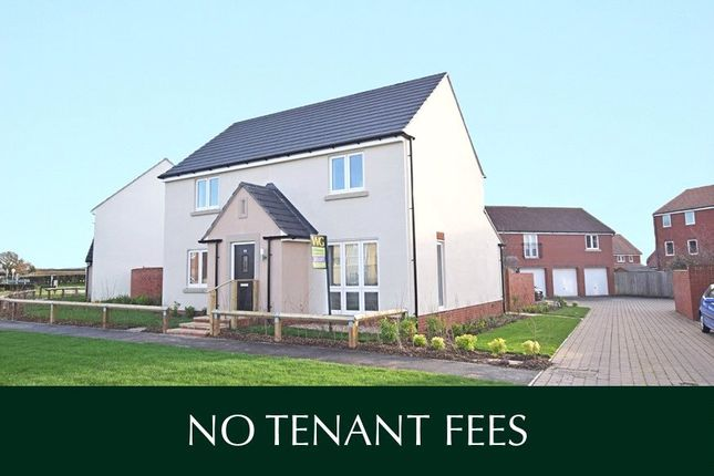 Thumbnail Detached house to rent in Cranbrook, Exeter, Devon