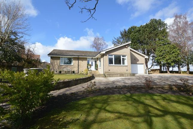 Thumbnail Bungalow for sale in Newton-On-The-Moor, Morpeth