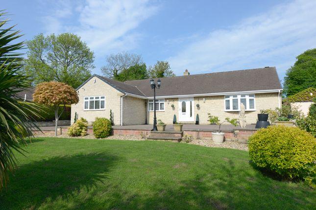 Thumbnail Detached bungalow for sale in Francis Close, Brimington, Chesterfield