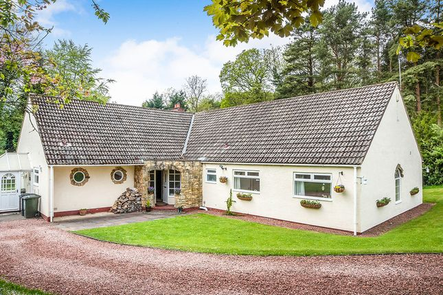 Thumbnail Bungalow for sale in The Paddock, Stocksfield