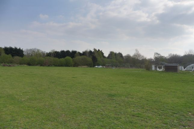 Thumbnail Land for sale in Elmham Road, Beetley, Dereham