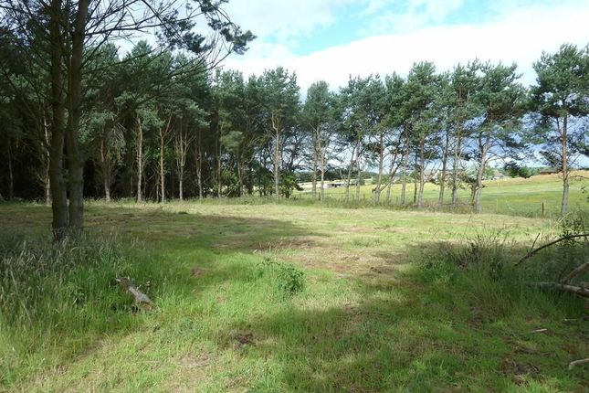 Thumbnail Land for sale in Easter Buthill, Roseisle