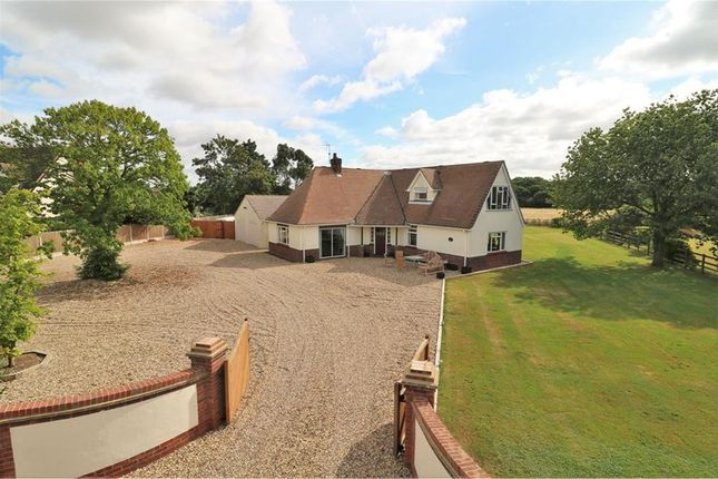 Thumbnail Detached house to rent in Alresford Road, Colchester, Essex