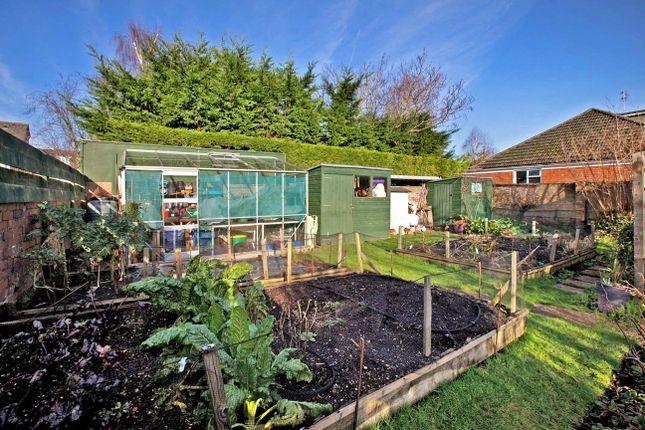 Veggie Garden of Higher Shapter Street, Topsham, Exeter EX3