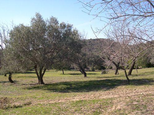 Land for sale in Portugal, Algarve, Loule