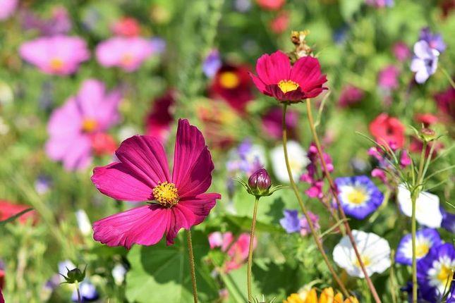 Flower-Meadow of Ariconium Place, Weston Under Penyard, Ross-On-Wye HR9