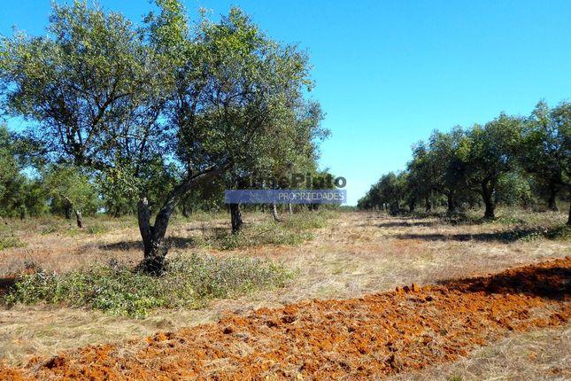 Thumbnail Land for sale in 615Ha, Cows, Olive Grove, Water, Cork, Pavia, Mora, Évora, Alentejo, Portugal