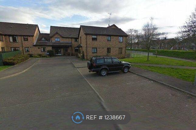 Thumbnail Flat to rent in Morar Court, Grangemouth