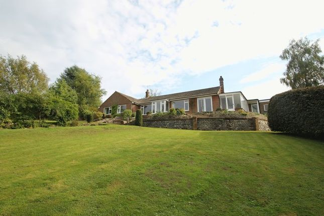 Thumbnail Detached bungalow to rent in Woodhouse Lane, Holmbury St. Mary, Dorking