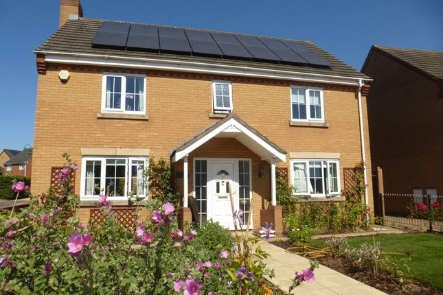 Thumbnail Detached house for sale in Holly Walk, Hampton Hargate, Peterborough