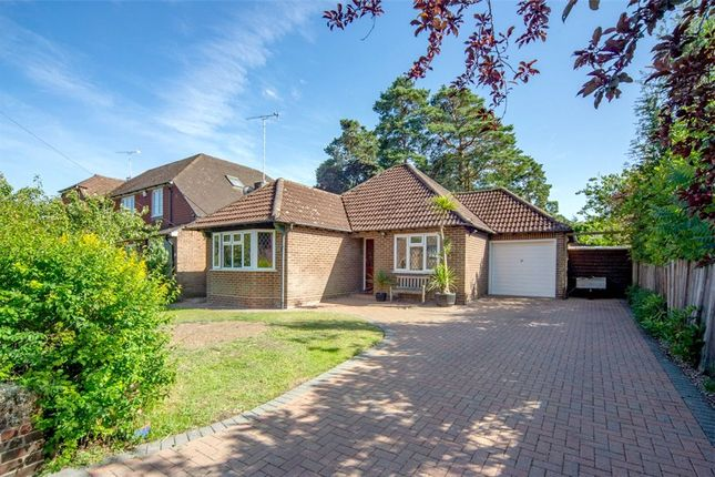Thumbnail Bungalow for sale in Spring Woods, Sandhurst, Berkshire