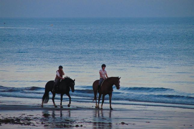 Horse_Riding of Second Floor Apartments, Coastal Links, Main Street, Portrush BT56