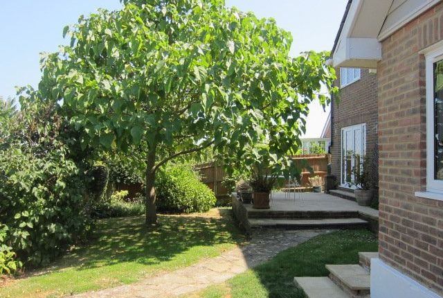 Thumbnail Detached house to rent in Wealden Park, Eastbourne