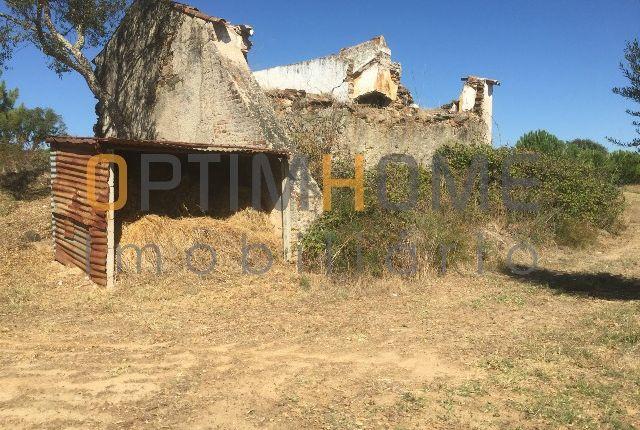 Farm for sale in 7425 Montargil, Portugal