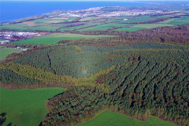 Thumbnail Land for sale in Flimby Great Wood, By Flimby, Cumbria